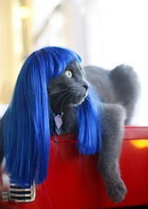 Cat in Blue Wig